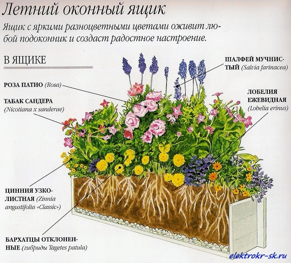Композиции цветов для балконных ящиков. обсуждение на livein.
