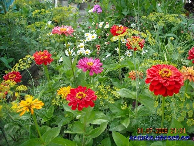 настоек или окуривающего средств для борьбы с вредителями и болезнями садовых и огородных культур