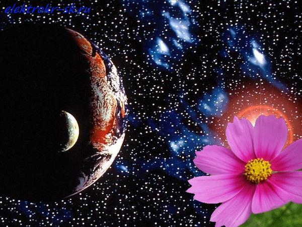 фото цветы космос